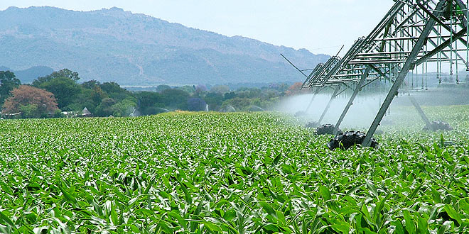 agroindustria ayudas