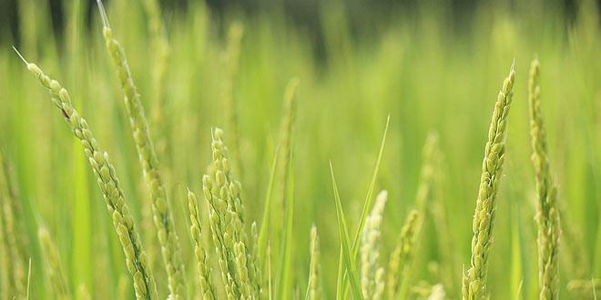 Jornadas-arroz