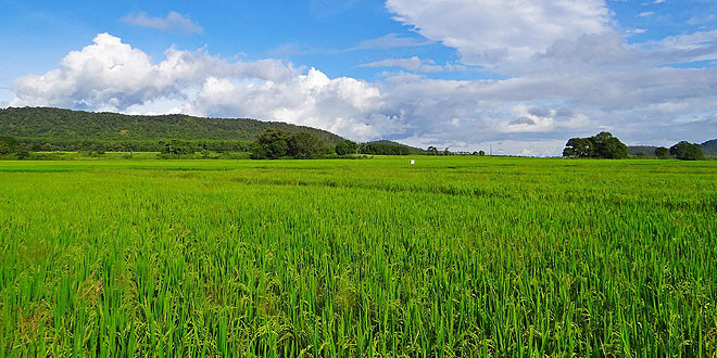 subvenciones-seguros-agrarios