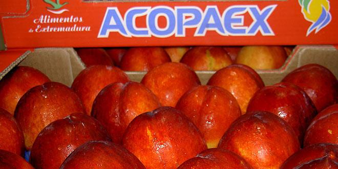 acopaex-cooperativa