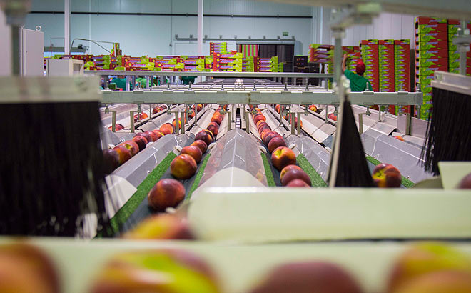 acopaex-agroindustria