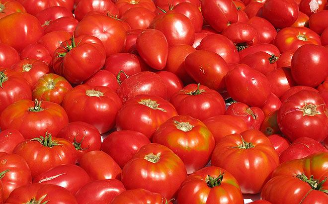 acopaex-tomate